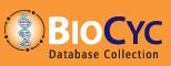 BioCyc